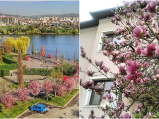 Concurs FOTO: A înflorit Clujul